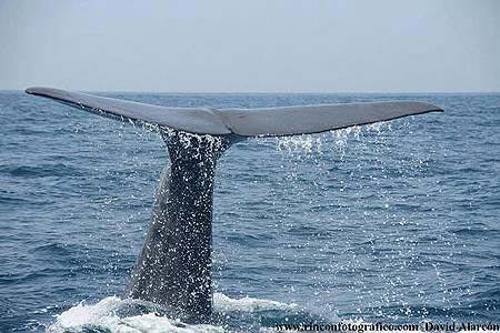 Whale Watch Tarifa